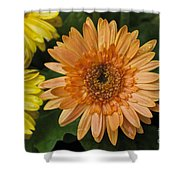 Yellow And Peach Daisy Shower Curtain
