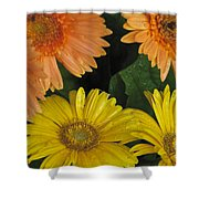 Yellow And Peach Shower Curtain