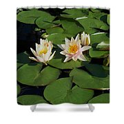 Yellow  And Pink Lily  Shower Curtain