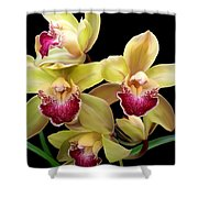 Yellow And Pink Orchids Shower Curtain