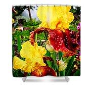 Yellow And Purple Iris Shower Curtain