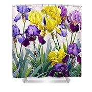 Yellow And Purple Irises Shower Curtain