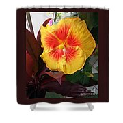 Yellow And Red Hibiscus Shower Curtain