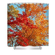 Yellow And Red Shower Curtain