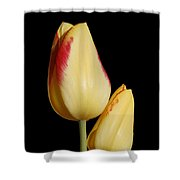 Yellow And Red Tulips  Shower Curtain