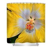 Yellow And White Hibiscus Shower Curtain