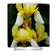 Yellow And White Irises Shower Curtain
