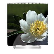 Yellow And White Peony Flower Shower Curtain