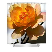Yellow And White Rose Shower Curtain
