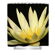 Yellow And Yellow Waterlily...   # Shower Curtain