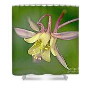 Yellow Aquilegia Bloom Shower Curtain
