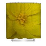 Yellow Begonia Shower Curtain