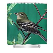 Yellow-bellied Flycatcher Shower Curtain
