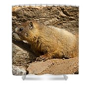 Yellow Bellied Marmot Checking Out The Neighborhood In Rocky Mountain National Park Shower Curtain