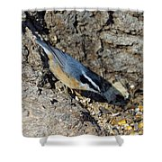 Yellow Bellied Nuthatch Shower Curtain