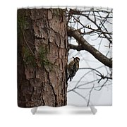 Yellow Bellied Sapsucker In The Pine Shower Curtain