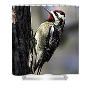 Yellow Bellied Sapsucker Shower Curtain