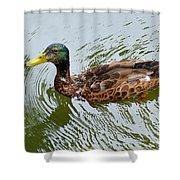 Yellow Billed Duck Shower Curtain