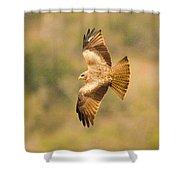 Yellow Billed Kite 7 Shower Curtain