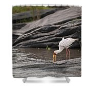 Yellow-billed Stork Fishing In River Shower Curtain