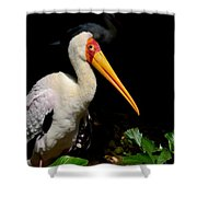 Yellow Billed Stork Peers At Camera Shower Curtain