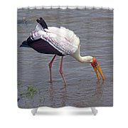 Yellow Billed Stork Shower Curtain