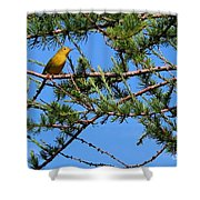 Yellow Bird In A Juniper Tree Shower Curtain