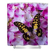 Yellow Black Butterfly On Hydrangea Shower Curtain