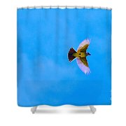 Yellow Breasted Blue Sky Shower Curtain