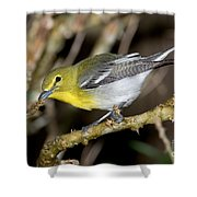 Yellow-breasted Vireo Shower Curtain