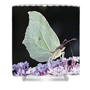 Yellow Brimstone Shower Curtain