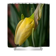 Yellow Bud Shower Curtain
