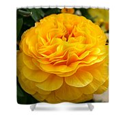 Yellow Buttercup Shower Curtain