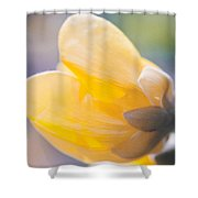 yellow buttercup flower II Shower Curtain
