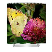 Yellow Butterfly On Pink Clover Shower Curtain