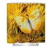 Yellow Butterfly On Yellow Mums Shower Curtain