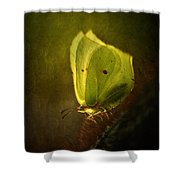 Yellow Butterfly Sitting On The Moss  Shower Curtain