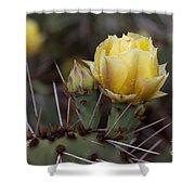Yellow Cactus Shower Curtain