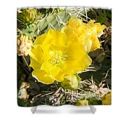 Yellow Cactus Blooms And Buds Shower Curtain