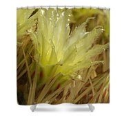 Cactus Blossom 2 Shower Curtain