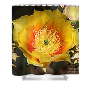 Yellow Cactus Flower Square Shower Curtain