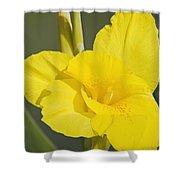 Yellow Canna 2 Shower Curtain