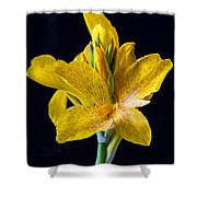 Yellow Canna Flower Shower Curtain