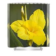 Yellow Canna Shower Curtain