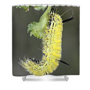 Yellow Caterpillar 1 Shower Curtain