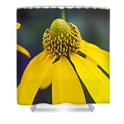 Yellow Cone Flower Rudbeckia Shower Curtain