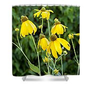 Yellow Cone Flowers Rudbeckia Shower Curtain