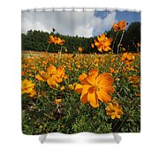 Yellow Cosmos Field In Flower Japan Shower Curtain