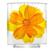 Yellow Cosmos Shower Curtain