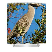 Yellow Crown Night Heron Shower Curtain